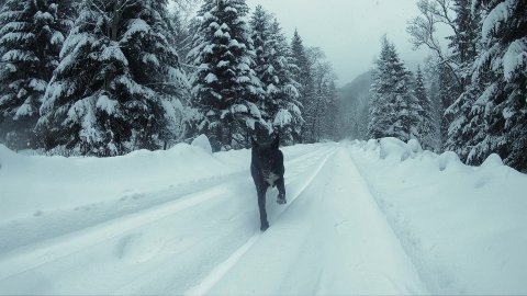 The Black Dog and Snow-covered Mountain Road in Winter. Slow Motion. - stock footage