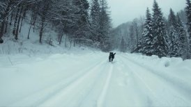 Snow-covered mountain road in a forest. The black dog runs to the camera.