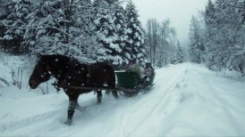 Editorial Video of Sleigh Ride On Snow-Covered Mountain Road In a Forest.