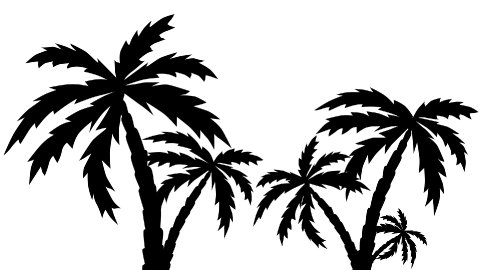 silhouette palm trees growing - stock footage