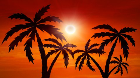 sunset with palm-trees - stock footage