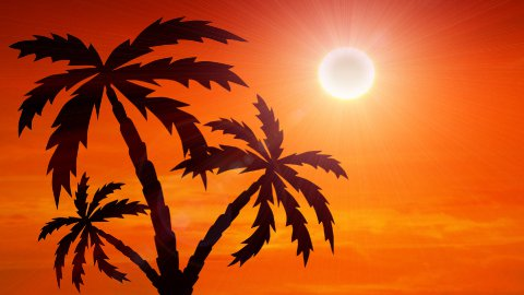 sunrise with palm trees growing - stock footage