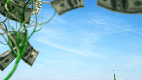 Money trees growing LOOP - stock footage