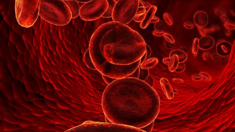 Blood cells - stock footage