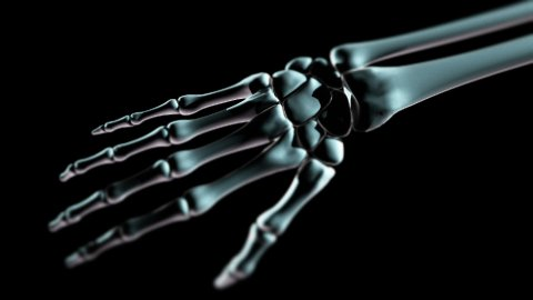 Hand bones LOOP - stock footage
