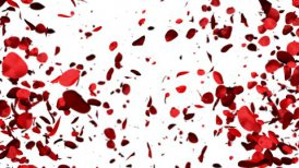 Heart of Rose Petals exploding, Alpha - motion graphic