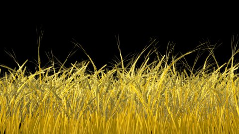 Growing wheat, Alpha included - stock footage