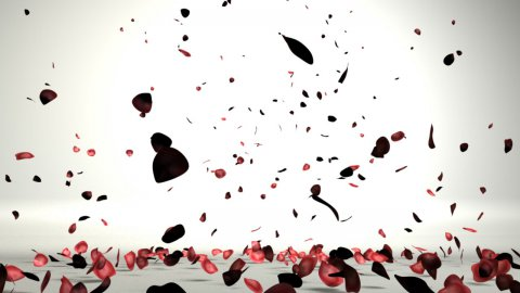 Rose petals in a white room falling on the floor,nice shadows on the ground - stock footage