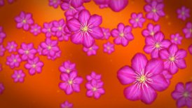 Flower against red - motion graphic