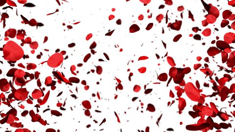 Rose Petals forming a Heart - stock footage