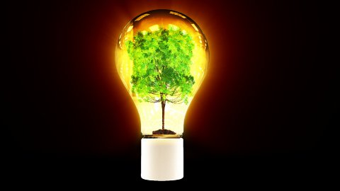 Tree growing inside shiny bulb, green energy concept - stock footage