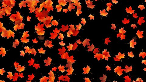 Maple leafs falling background, Alpha Channel - stock footage