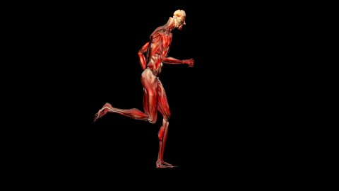Silhouette musculature running,loop,Alpha Channel - stock footage