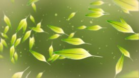 Colorful feathers against green - motion graphic