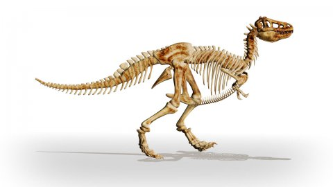 Dino T-Rex walking,loop - stock footage