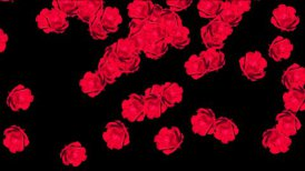Red roses with Alpha - editable clip, motion graphic, stock footage