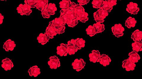 Red roses with Alpha - stock footage