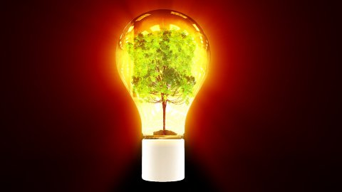 Tree growing inside flashing colorful bulb - stock footage